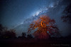 24-Botswana_2016 (Beverly Houwing) Tags: africa botswana desert islandoflostbaobabs kalahari mgadikgadipans saltpan night astrophotograhy sky stars milkyway galaxy lightpainting longexposure gold orange