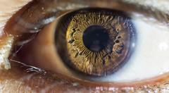 Desert Eye, Macro (shahbaz0_0) Tags: eye macro close up nikon105mmf28micro shot alone