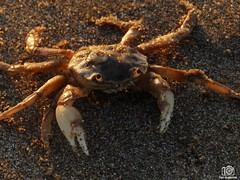 PC060191 (Tam Gugliermo) Tags: beach ocean nature sky naturaleza boy photography fotografia argentina crab animals dog wave dawn sun sunshine