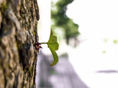 Little friend on the Road (uberlisolivares) Tags: nature street concret road bokeh macro