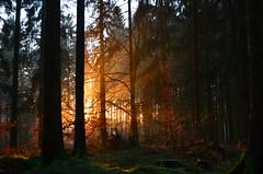 DSC_5508 Ein traumhafter Tag neigt sich dem Ende - A dreamlike day is coming to an end (baerli08ww) Tags: deutschland rheinlandpfalz germany rhinelandpalatinate westerwald westerforest wald forest frost landschaft landscape licht light raureif hoarfrost nebel mist natur