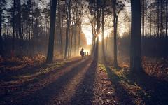 Family-5938 (EbE_inspiration) Tags: light woods walking family trip bike sun nikon outdoor outside nature naturallight nikond7100 d7100