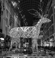 DSC06750 (Moodycamera Photography) Tags: cityoftoronto eatoncenter baywondows nighttime sony a6000 hdr blackandwhite downtown handheld dundassquare ttc cityhall nathanphillipssquare iceskating christmastree lights family aryanna norstrom