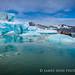 挪威北極熊_1d3_20150730-24.jpg