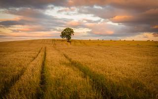 Carlow sunset