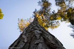 Looking up to the nature (Diverse-Media.nl) Tags: trees sun sunlight tree nature bomen artistic natuur boom breda bos zon zondag zonlicht dorst baronie dmart dmnat