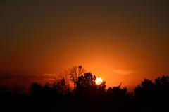 DSC_2321 (bfaling) Tags: trees columbus ohio red summer orange sun yard sunrise back glow neighborhood oh 2015