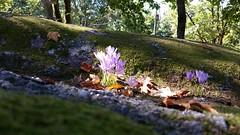 Parque (jcmdn_87) Tags: morning flowers flores flower verde green portugal nature beautiful rock leaf natureza flor beleza norte guimares lilas rocha