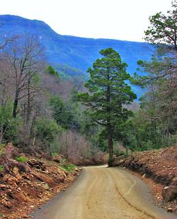 Caminos ,region del maule,parque nacional siete tazas,Chile