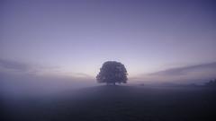 Mornings promise (Malajusted1) Tags: trees england mist sunrise yorkshire pastoral dales malham skipton malhamdale malhamcove 2015 airton gargrave yorkshiredalesnationalpark eshton lpoty