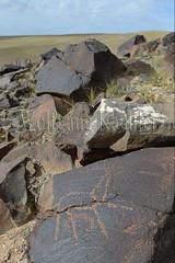 30095309 (wolfgangkaehler) Tags: old animal animals rock asian ancient asia desert deer mongolia centralasia petroglyph gobi reddeer blackmountains petroglyphs mongolian gobidesert southernmongolia