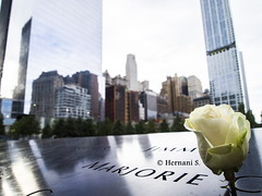 One Of Many (Hernes08) Tags: world new york city white rose memorial center trade remeber