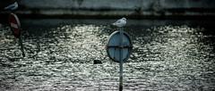 Cop 21, 22, 23 etc. (Alexandre LAVIGNE) Tags: eau oiseaux panneaux ambiance mouettes signaletique cop21 louisengival pentaxk3 format2351 smcpentaxda300mm14sdm hdpentaxdaaf14xaw