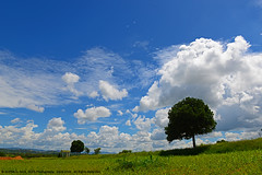 IN MY DREAM LAND... (GOPAN G. NAIR [ GOPS Photography ]) Tags: blue windows sky tree green clouds landscape photography amazing background dream land backdrop greenery gops gopan heavenlyclouds gopsorg gopangnair gopsphotography