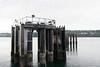_DSC3142 (marilynwe) Tags: 2016 edmonds washington ferrylanding kingston water sunrise ferry