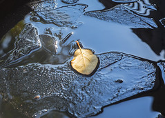 Thin Ice (explored 07/11/2015) (monorail_kz) Tags: blue autumn reflection ice water yellow leaf foliage helios442