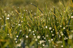 dew drops (simo m.) Tags: drops magic natura dew rugiada rocio