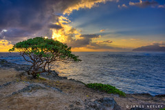 Sunrise at Lani Loa Point (James Neeley) Tags: hawaii laie laniloapoint landscape sunrise 3xphdr jamesneeley