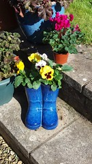 Blue Wellies. Fresh Flowers. (Pat ann 44) Tags: flowers flowerpot bluewellies