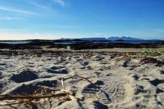 Beach (Maia MacGilp) Tags: highlands depthoffield isleofrum isleofeigg scotland beach