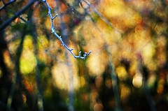 bush abstract (SS) Tags: ss pentax k5 bokeh autumn lazio italy countryside frost smcpentaxm50mmf17 fall colors focus blur depthoffield dof abstract