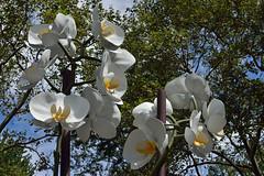 Several Giant Moths (Eddie C3) Tags: newyorkcity centralpark artintheparks isagenzken doriscfreedmanplaza sculpture twoorchids
