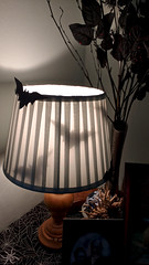 My Friend's Halloween Lamp (Martin Pettitt) Tags: uk burystedmunds motorolag3 suffolk halloween indoor smartphone bats lamp october autumn project366