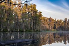 Lake Park golden hour at Lake Jackson (tfhammar) Tags: lakepark sunrise cypress swamp