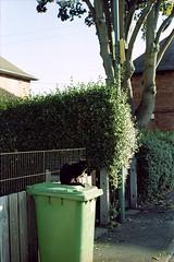 Territory (Noah MM) Tags: nikon f801 kodacolor kodak c41 epson film analogue 35mm cat feline black bin tree nottingham