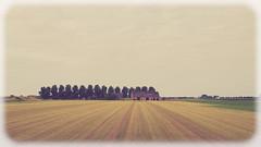 Tholen-2014-1.jpg (Wang Yibing) Tags: fujixe1 tholen farm holland netherlands explored
