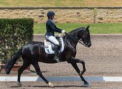 161023_Aust_D_Champs_Sun_Med_4.3_6738.jpg (FranzVenhaus) Tags: athletes dressage australia siec equestrian riders horses performance event competition nsw sydney aus