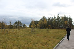 green loneliness (paulinbubble) Tags: woods deepinthewoods green loneliness turku nationalpark
