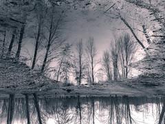 Trees b&n (jc.mendo) Tags: jcmendo iphone6 iphone apple arboles arbol tree trees reflexion reflejo reflection rio tormes river salamanca