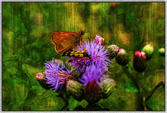 beetle and butterfly (franzisko hauser) Tags: nature nikond5300 beetle butterfly plants flowers distel creative