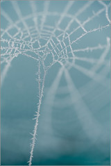 Cold Thread (mikeyp2000) Tags: crystal blue macro crystals thread a99ii closeup frost web cobweb ice