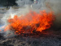 Dancing in the flames (wallygrom) Tags: england westsussex angmering manornursery manornurseries