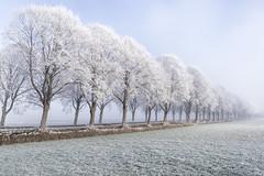 Winter_IMG_8469 (milanpaul) Tags: 2016 allee canoneos6d dezember holland landscape landschaft landstrase nebel niederlande raureif tamron2470mmf28divcusd winter