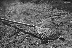 Listo para trabajar. (spawn5555) Tags: herramienta jardn garden casa home cotidiano nikon mexico d3000 objeto
