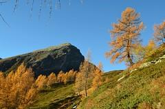 Passit (dino_x) Tags: trees mountains mountain montagna nature natura colours switzerland saveearth allaperto alps autunno autumn alpi