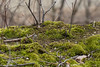 Microcosm (K.G.Hawes) Tags: flora green moss mosses mossy plant plants woods forest forested