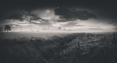 Foggy Pendle Hill (MatthewSavage.Photography) Tags: pendlehill ribblevalley pendle panoramic landscape sunrise clouds trees lancashire blackandwhite monochrome outdoors ngc