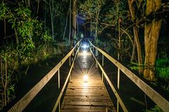 Bridge of Lanterns (stephenk1977) Tags: australia queensland qld brisbane enoggera alderley banksstreetreserve bridge wooden night light painting convoys2 tint warm cool neutral white diffuser nikon d3300
