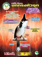 นกกรงหัวจุก ลักษณะทางธรรมชาติ