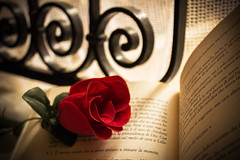 Dream of love is never enough. (nasta.rosalia) Tags: flower love beautiful rose creativity book amazing amor redrose creative rosa libro minimal amour romantic railing minimalism ideas fiore amore interni sweetmoment ringhiera italianlove romanticatmosphere