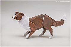 Border Collie (Koh) Sketch 1 (cavemanboon*) Tags: bordercollie ロナルド・コウ 折り紙 origami paperfolding cavemanboon singapore malaysia ronaldkoh ボーダーコリー origamidog 犬 摺紙 折纸 狗 邊境牧羊犬 边境牧羊犬 boon 羅納德・許