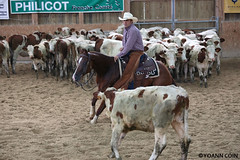 BJ1A8255 (yoann.coin) Tags: horse france western cutting ncha remoray