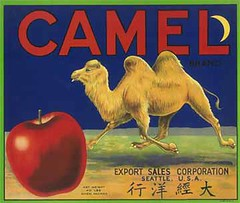 """Camel • <a style=""""font-size:0.8em;"""" href=""""http://www.flickr.com/photos/136320455@N08/21460728082/"""" target=""""_blank"""">View on Flickr</a>"""