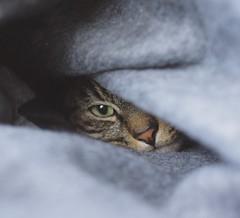 Sleepyhead (kul.ua) Tags: cute cat sleepyhead