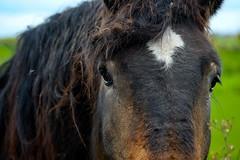 4007... Portrait  .dans les yeux (Photos.dan2010 Merci.Thanks pour vos 1.M. Visites) Tags: cheval fuji fujifilm fujinon trait npdc xpro1