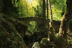Pilio Tsagarada Old Bridge in the wood_Part 2 (spicros78) Tags: travel bridge autumn light green nature canon way landscape rocks map traditional relaxing natura visit explore greece bella dslr volos pilio